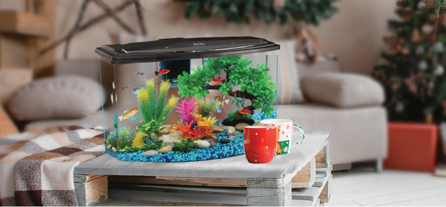 Throw Your Worries Away for your Aquarium When You are Travelling (2020)